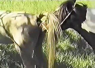 Extremely hot outdoors sex with a horse